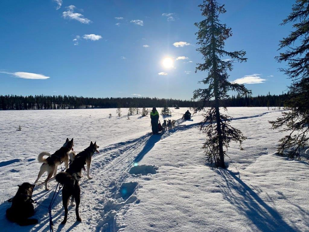 Huskytour Fahrt über Seen und Sümpfe