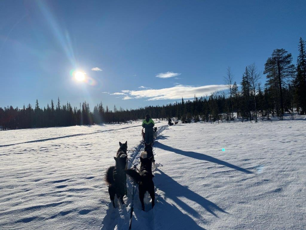 Winter in Lappland Hundeschlittentour