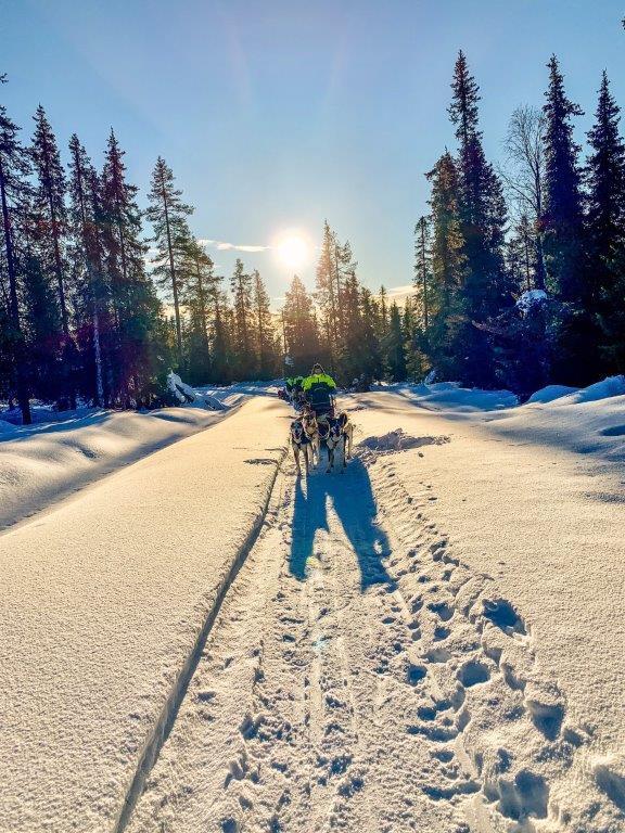 Hundeschlitten Sonne Schnee Huskys