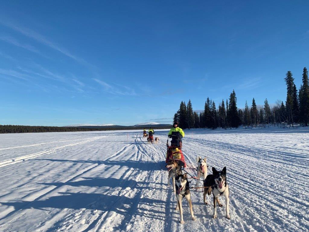 Huskytour Fahrt über gefrorenen See
